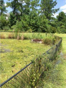 Clogged Retention Pond Jacksonville NC